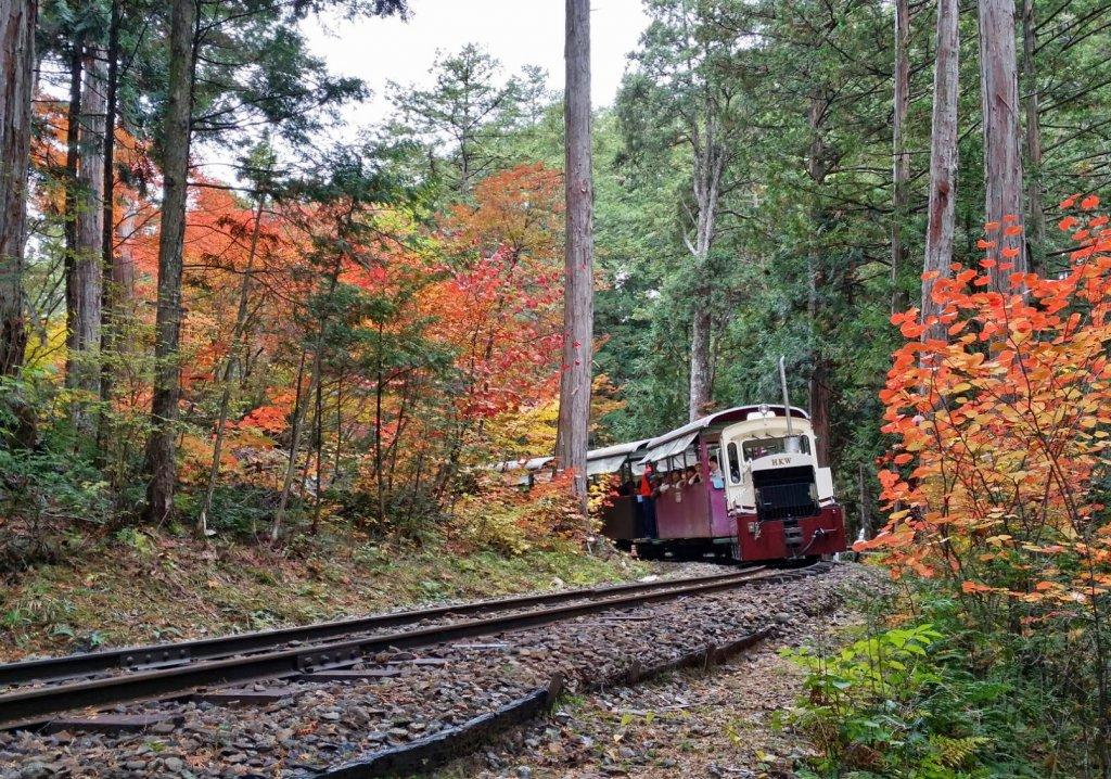 森林鉄道 紅葉2